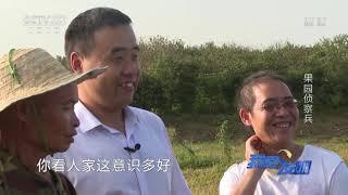 《我爱发明》 20200106 果园侦察兵|CCTV农业
