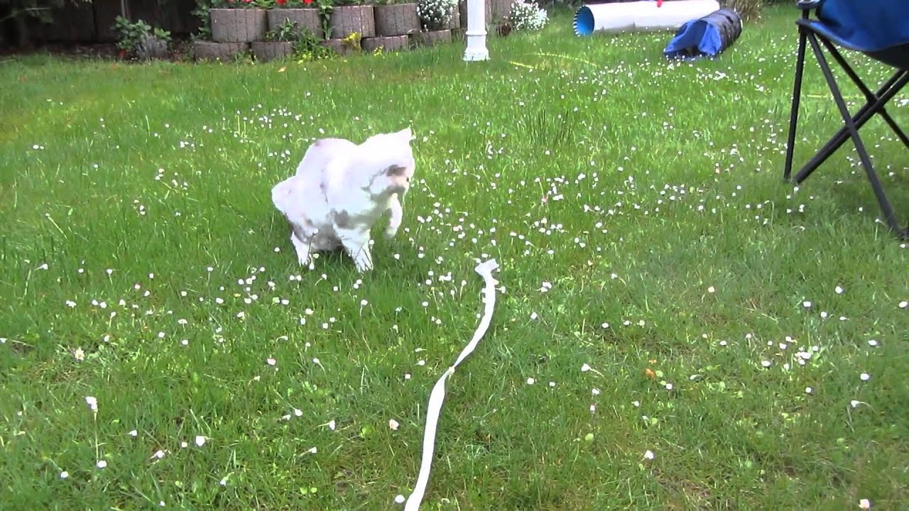 Katzen Garten Mai2013 Youtube
