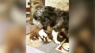 Cute and funny puppies