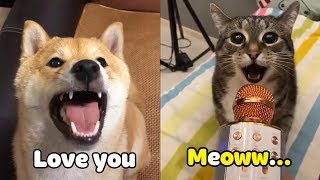 「Engsub」OMG! Cats 😻 And Dogs 🐶Can Speak English! - Funny Animals