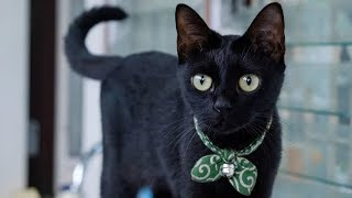 Funny BLACK cat video compilation  Funny Cat and Cute Kittens