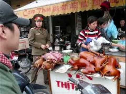 Vietnam People Love To Eat Dog And Cat