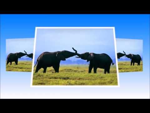 Детский ансамбль *Задумка* -  Добрые слоны
