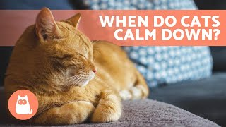 What AGE Do KITTENS CALM DOWN? 🐱 (Kitten to Adult Cat Development)