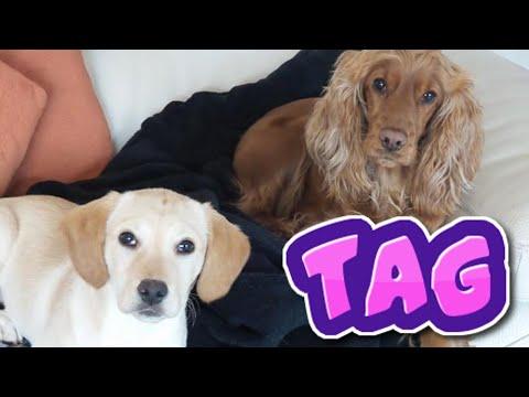EL TAG DE LA MASCOTA- vlogs diarios - Isa & Vic - Blogs ❤️