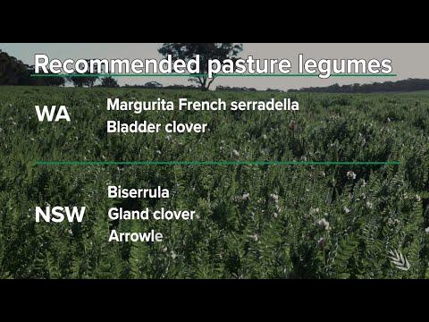 Summer Sown Legumes