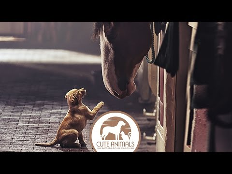 Amazing Friendship Dogs and Horses