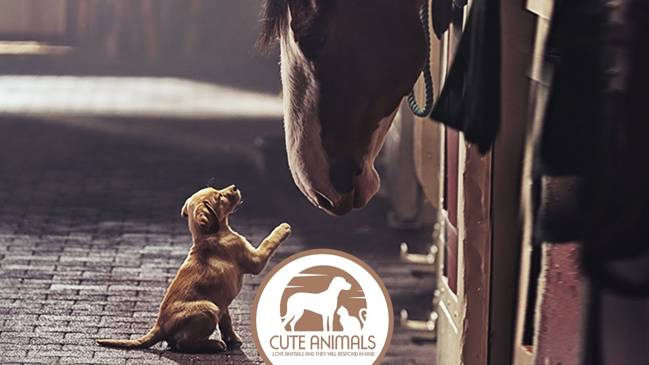 ASPCA Therapy Animal Program
