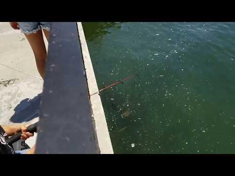 EASY FISHING SPOT At Huntington Beach Harbor