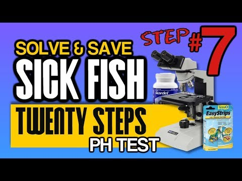 Influence And Factors Of PH On Fish And Koi Disease:  Step 7 Of 20