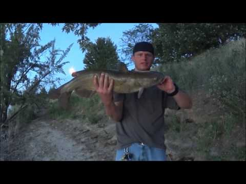 Catching Catfish On The Snake River