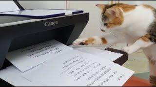 [Funny cat & printer, A ca…