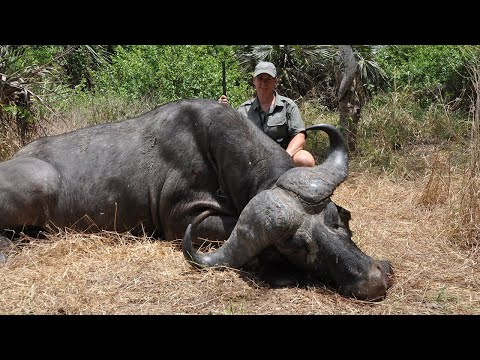 Vanessa Harrop Buffalo Hunt With Heritage Safaris