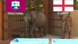 DADA Haathi (Elephant) prediction for England vs West Indies match