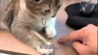 Какой запах коты не переносят