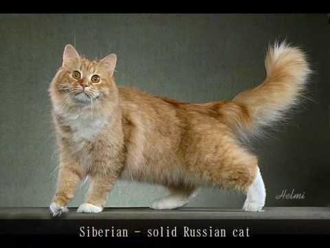 77 Cat Breeds in 4 and a half minutes - phew!