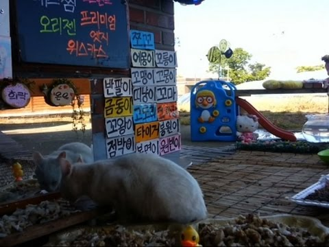 This live stream of stray cats in Korea is like real-life Neko Atsume