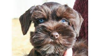 9 dog breeds