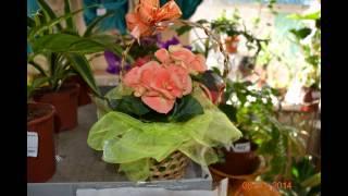 Все для сада и огорода(, 2015-05-06T18:35:17.000Z)