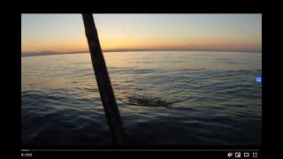 Blinker Dorsche in der Dämmerung / Livebisse/Water Wolf/Pures Fischen ohne schnickschnack