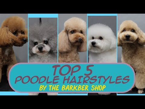 Top 5 Poodle Hairstyles The Barkber Shop Youtube