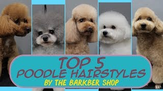 TOP 5 Poodle Hairstyles ( The Barkber Shop )