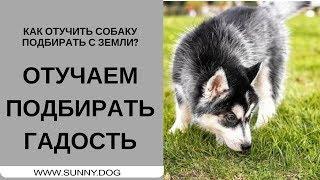 Как отучить собаку подбирать с земли?   Отучаем жрать гадость