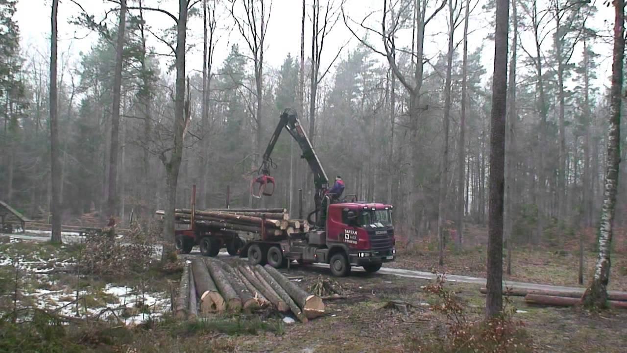 Praca w lesie - wywóz drewna - YouTube