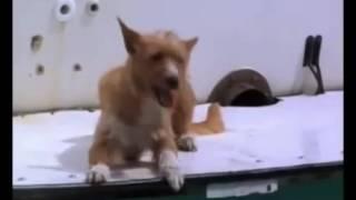 Супер клип! Дельфин спасает  собаку!