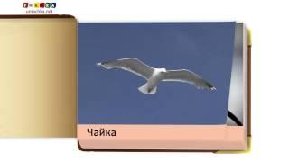 Відео для дітей від 1 року Презентація 'Птахи' (1)