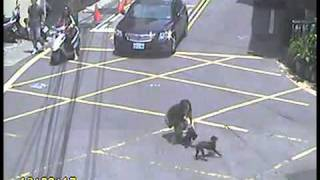 Repeat youtube video 車に踏み潰される犬