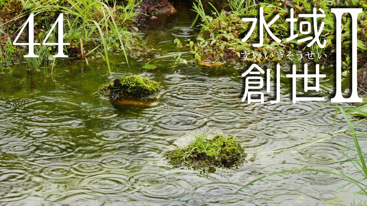 災害級大雨の中のメダカ池 水域創世Ⅱ- 44【4K】