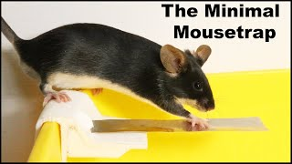The Minimal Mousetrap. Catching Mice by Keeping It Simple. Mousetrap Monday