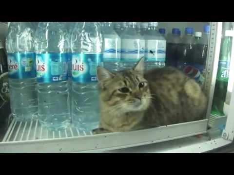 Cat On Heat Youtube