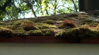 Biocomb Puhdas katto