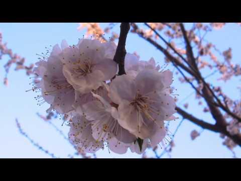 Цветущий май из фото автора