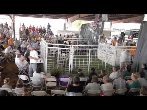 Livestock Auctions