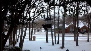 Blue Jay Disrupting Bird Feeder - Shorter