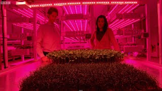 Growing Plants w/ LED Technology - Bang Goes The Theory - Brit Lab - BBC