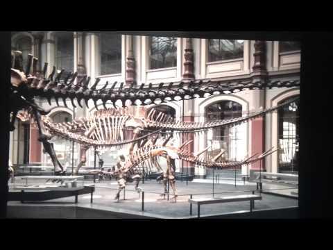 Museumfür Naturkunde: The World ofDinosaurs