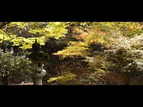 The Kyoto Network - Takao
