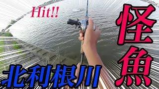【霞ヶ浦水系】「北利根川の怪魚」霞ヶ浦でバス釣り 外道編