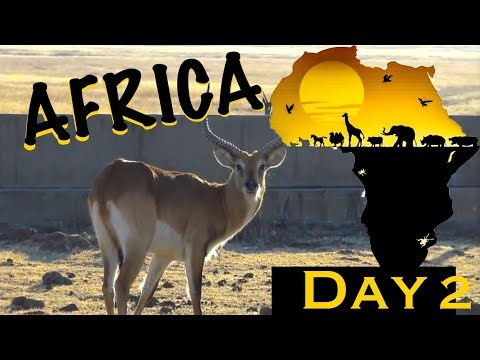 AFRICA Hunt | Day 2  (Red Lechwe & More)