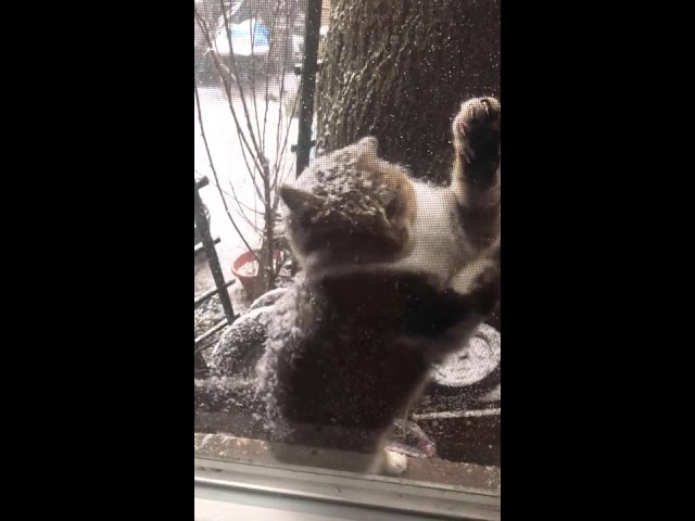 Stray Cat Shows Up Outside Guy's Window In Polar Vortex