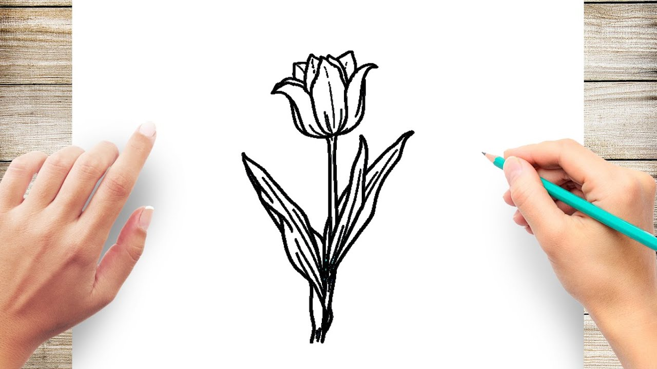 How To Draw Tulip Flowers Youtube