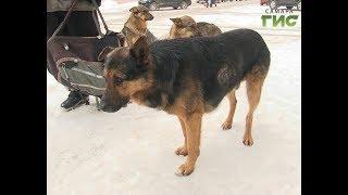 Стрельба, кровь и визг собак. Полиция начала проверку по факту стрельбы в центре Самары