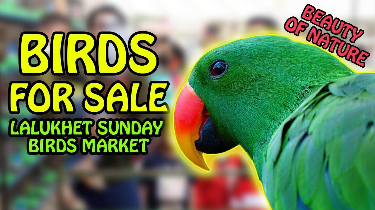 Birds For Sale >> Birds For Sale In Karachi Lalukhet Sunday Birds Market Beauty Of