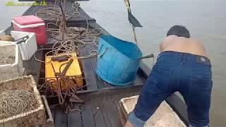 Về trà vinh xem giăng câu bắt cá bông lau
