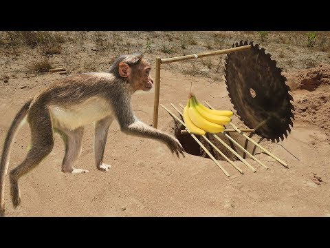 DIY Simple Monkey Trap - How to Make a Simple Monkey Trap Using Cutter Sawing That Works 100%