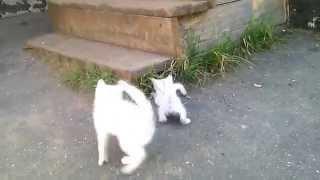 Забавные белые котята
